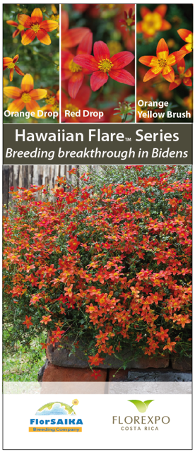 Bidens-Hawaiian-Flare-IPM-final